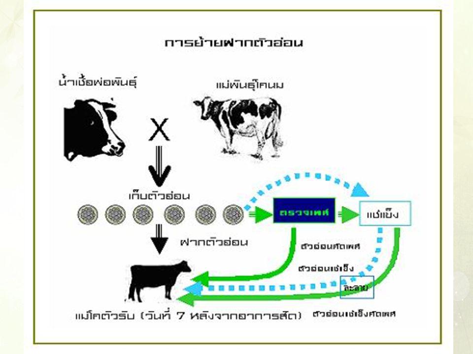 การโคลน (Cloning) คือ กรรมวิธี การนำเอา DNA ซึ่งเป็น ตัวกำหนดลักษณะทางพันธุกรรมในเซลล์ จากพืช หรือสัตว์ต้นแบบมา กระตุ้นให้เจริญพันธุ์ เพื่อสร้างตัวใหม่ การโคลน หรือ การปลูกถ่ายพันธุกรรม