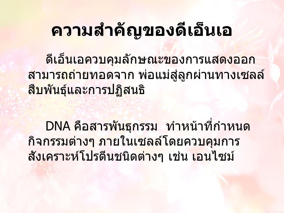 ความสำคัญของดีเอ็นเอ ดีเอ็นเอควบคุมลักษณะของการแสดงออก สามารถถ่ายทอดจาก พ่อแม่สู่ลูกผ่านทางเซลล์ สืบพันธุ์และการปฏิสนธิ DNA คือสารพันธุกรรม ทำหน้าที่ก