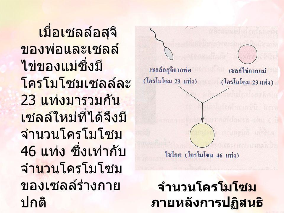 เมื่อเซลล์อสุจิ ของพ่อและเซลล์ ไข่ของแม่ซึ่งมี โครโมโซมเซลล์ละ 23 แท่งมารวมกัน เซลล์ใหม่ที่ได้จึงมี จำนวนโครโมโซม 46 แท่ง ซึ่งเท่ากับ จำนวนโครโมโซม ขอ