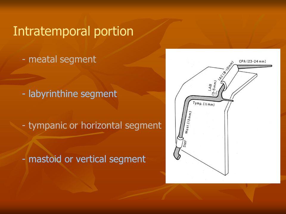 Intratemporal portion - meatal segment - labyrinthine segment - tympanic or horizontal segment - mastoid or vertical segment