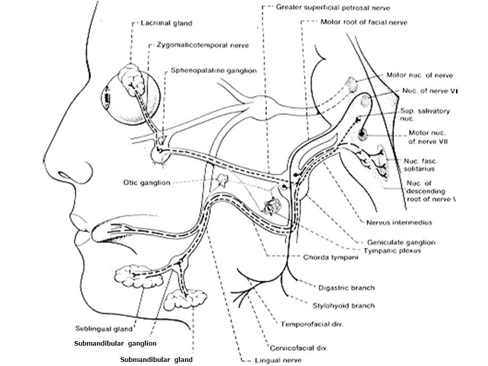 Submandibular ganglion Submandibular gland