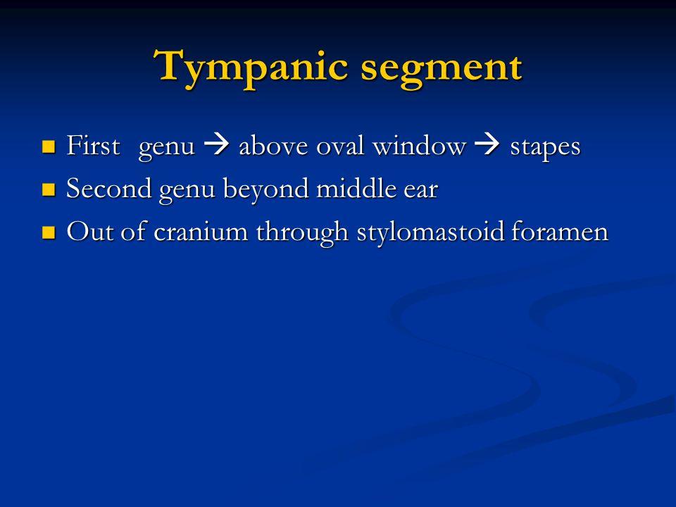 Tympanic segment First genu  above oval window  stapes First genu  above oval window  stapes Second genu beyond middle ear Second genu beyond midd