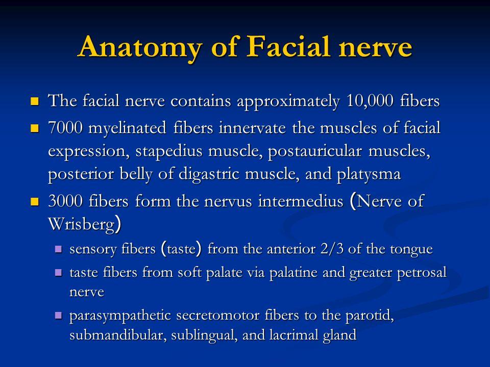 Anatomy of Facial nerve The facial nerve contains approximately 10,000 fibers The facial nerve contains approximately 10,000 fibers 7000 myelinated fi
