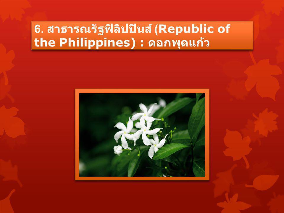 6. สาธารณรัฐฟิลิปปินส์ (Republic of the Philippines) : ดอกพุดแก้ว