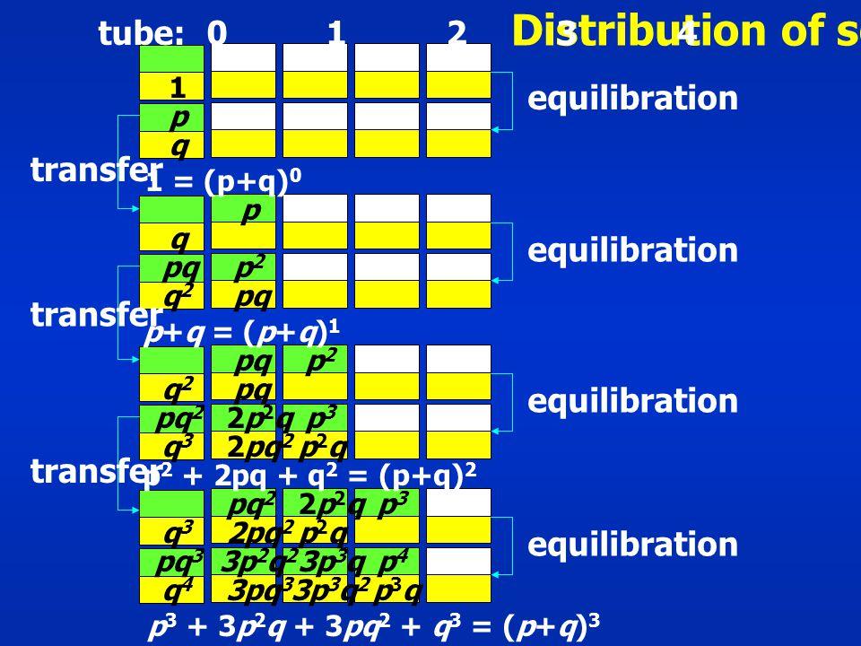 Distribution of solute tube: 0 1 2 3 4 1 p 1 = (p+q) 0 p q q pq q2q2 p2p2 p+q = (p+q) 1 q2q2 pq p2p2 pq 2 q3q3 2p2q2p2q 2pq 2 p3p3 p2qp2q p 2 + 2pq + q 2 = (p+q) 2 pq 2 2p2q2p2qp3p3 q3q3 2pq 2 p2qp2q pq 3 3p 2 q 2 3p 3 qp4p4 q4q4 3pq 3 3p 3 q 2 p3qp3q p 3 + 3p 2 q + 3pq 2 + q 3 = (p+q) 3 equilibration transfer