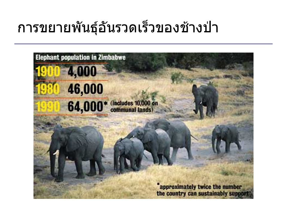 การขยายพันธุ์อันรวดเร็วของช้างป่า