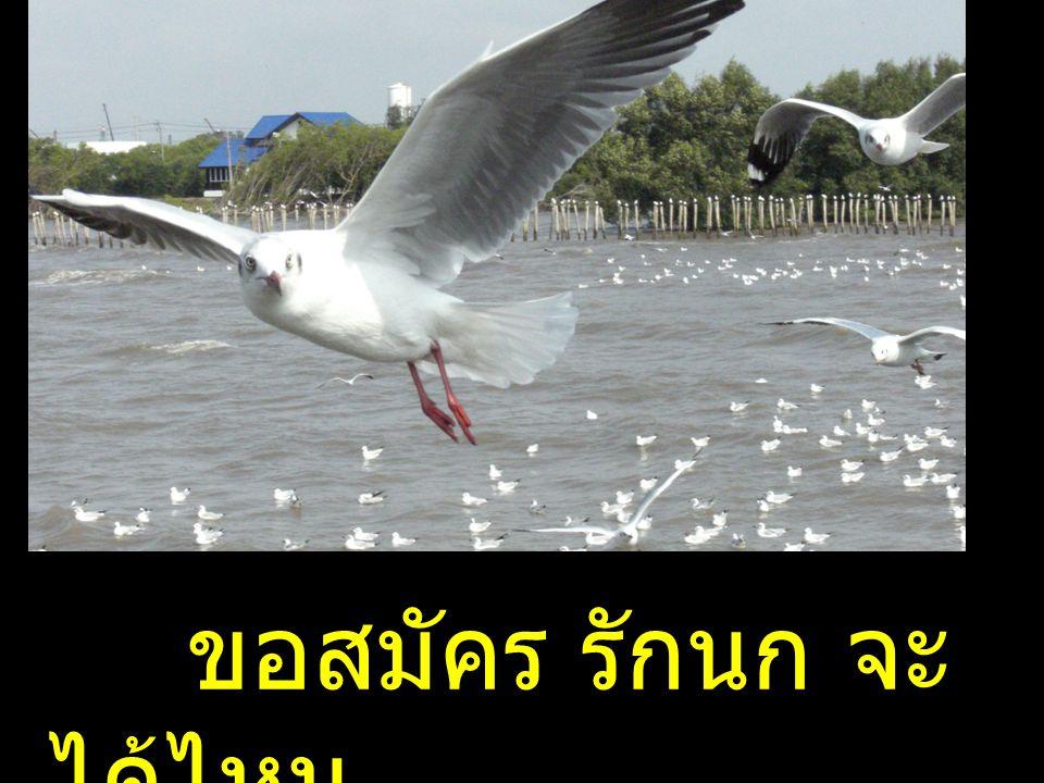 ขอสมัคร รักนก จะ ได้ไหม