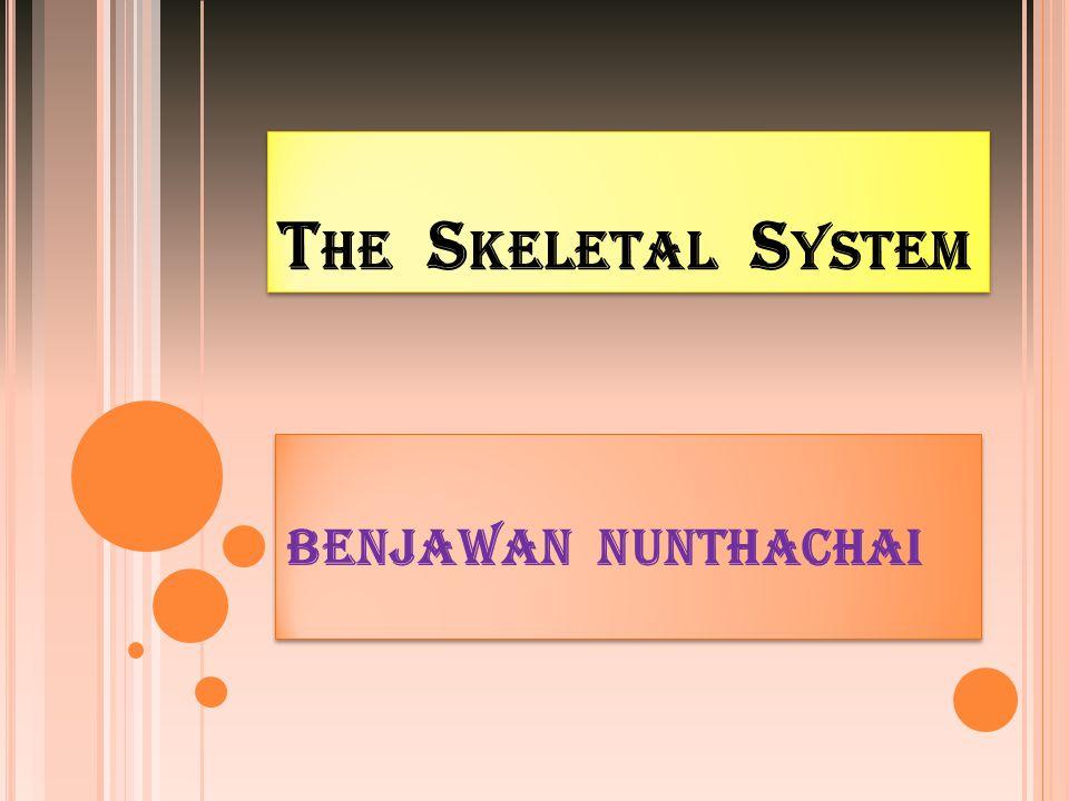 ขอบเขตเนื้อหา ประเภทของกระดูก และการทำหน้าที่ (Types of bone&Function) ส่วนประกอบภายใน กระดูก (Composition of bone) โครงสร้างของกระดูก (Structureof bones) ประเภทของกระดูก และการทำหน้าที่ (Types of bone&Function) ส่วนประกอบภายใน กระดูก (Composition of bone) โครงสร้างของกระดูก (Structureof bones) ชื่อกระดูกในส่วนต่างๆ ของร่างกาย (Descriptive Terms) ระบบโครงกระดูก (Skeletal System) ข้อต่อและเอ็น (Joints & Ligaments)