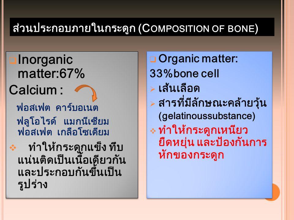 ส่วนประกอบภายในกระดูก (C OMPOSITION OF BONE )  Inorganic matter:67% Calcium : ฟอสเฟต คาร์บอเนต ฟลูโอไรด์ แมกนีเซียม ฟอสเฟต เกลือโซเดียม  ทำให้กระดูก