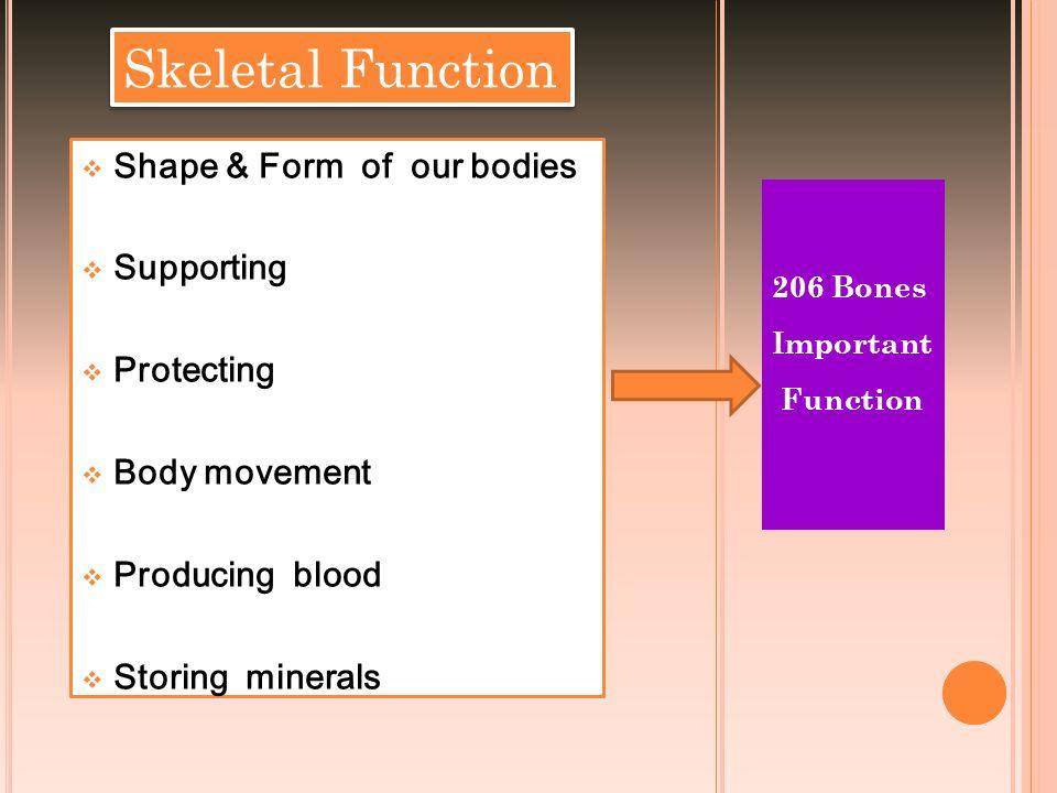 Anatomy of Skull