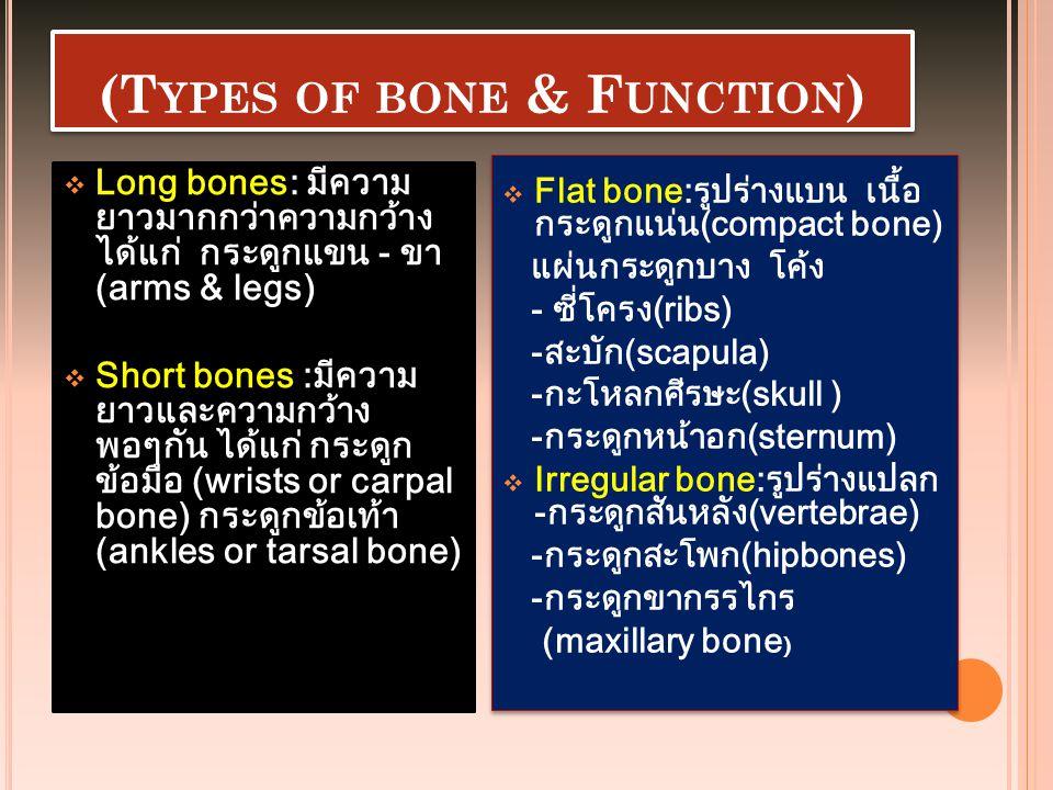 (T YPES OF BONE & F UNCTION )  Long bones: มีความ ยาวมากกว่าความกว้าง ได้แก่ กระดูกแขน - ขา (arms & legs)  Short bones :มีความ ยาวและความกว้าง พอๆกั