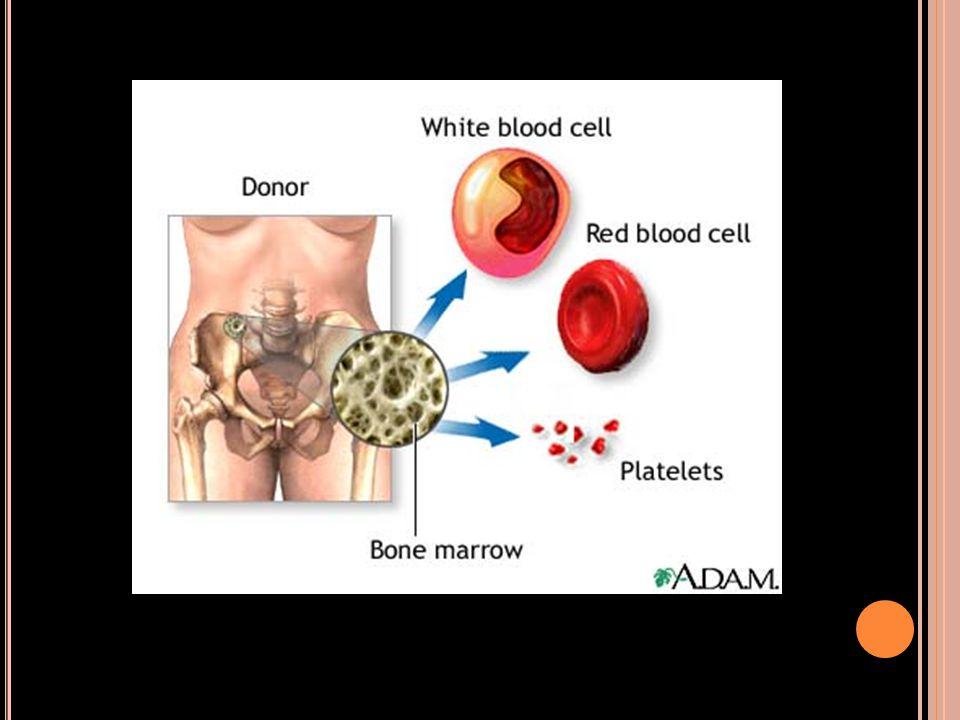 โครงสร้างของกระดูก(S TRUCTURE OF BONES ) Long bones of the body  Diaphysis : medullary cavity(contains yellow bone marrow)  Epiphysis :spongy bone tissue (contains red bone marrow)  Metaphysis: epiphyseal (growth) plate or hyaline cartilage Long bones of the body  Diaphysis : medullary cavity(contains yellow bone marrow)  Epiphysis :spongy bone tissue (contains red bone marrow)  Metaphysis: epiphyseal (growth) plate or hyaline cartilage Outer surface of the bone  Periosteum :nerve lymphatic vessels capillaries nutrient artery Outer surface of the bone  Periosteum :nerve lymphatic vessels capillaries nutrient artery