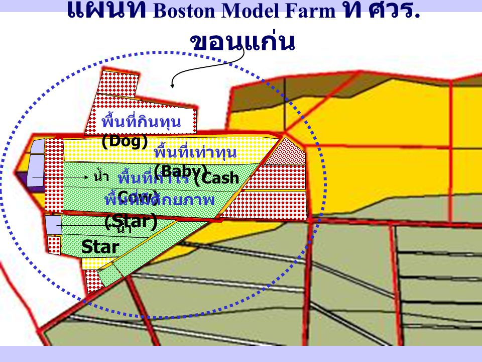 พื้นที่กำไร (Cash Cow) พื้นที่เท่าทุน (Baby) พื้นที่กินทุน (Dog) น้ำ พื้นที่มีศักยภาพ ( Star) Star แผนที่ Boston Model Farm ที่ ศวร.