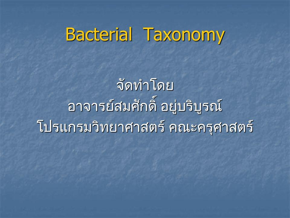 - bacterium : bacteria - ค. ศ. 1632-1723 Anton Van Leeuwenhock