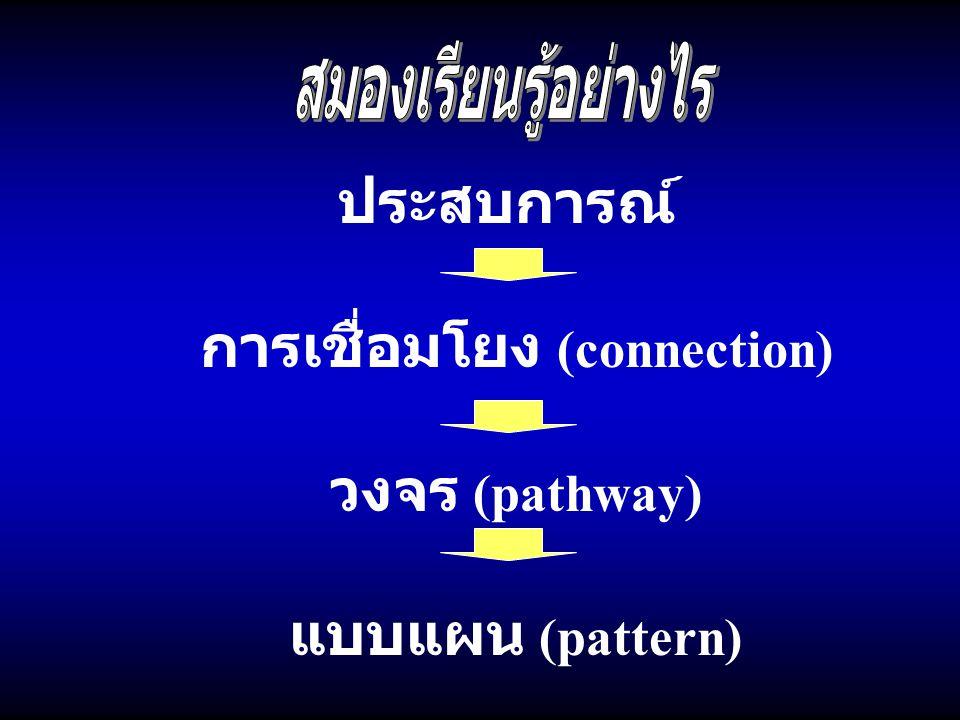 ประสบการณ์ การเชื่อมโยง (connection) วงจร (pathway) แบบแผน (pattern)