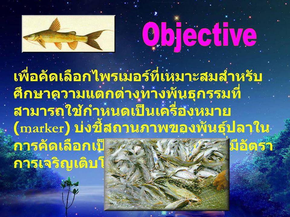 เพื่อคัดเลือกไพรเมอร์ที่เหมาะสมสำหรับ ศึกษาความแตกต่างทางพันธุกรรมที่ สามารถใช้กำหนดเป็นเครื่องหมาย (marker) บ่งชี้สถานภาพของพันธุ์ปลาใน การคัดเลือกเป็นพ่อ - แม่พันธุ์ปลาที่มีอัตรา การเจริญเติบโตที่ดี