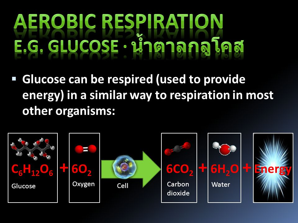  Glucose can be respired (used to provide energy) in a similar way to respiration in most other organisms: C 6 H 12 O 6 6O 2 6CO 2 6H 2 O Energy Glucose Oxygen Carbon dioxide Water +++ Cell