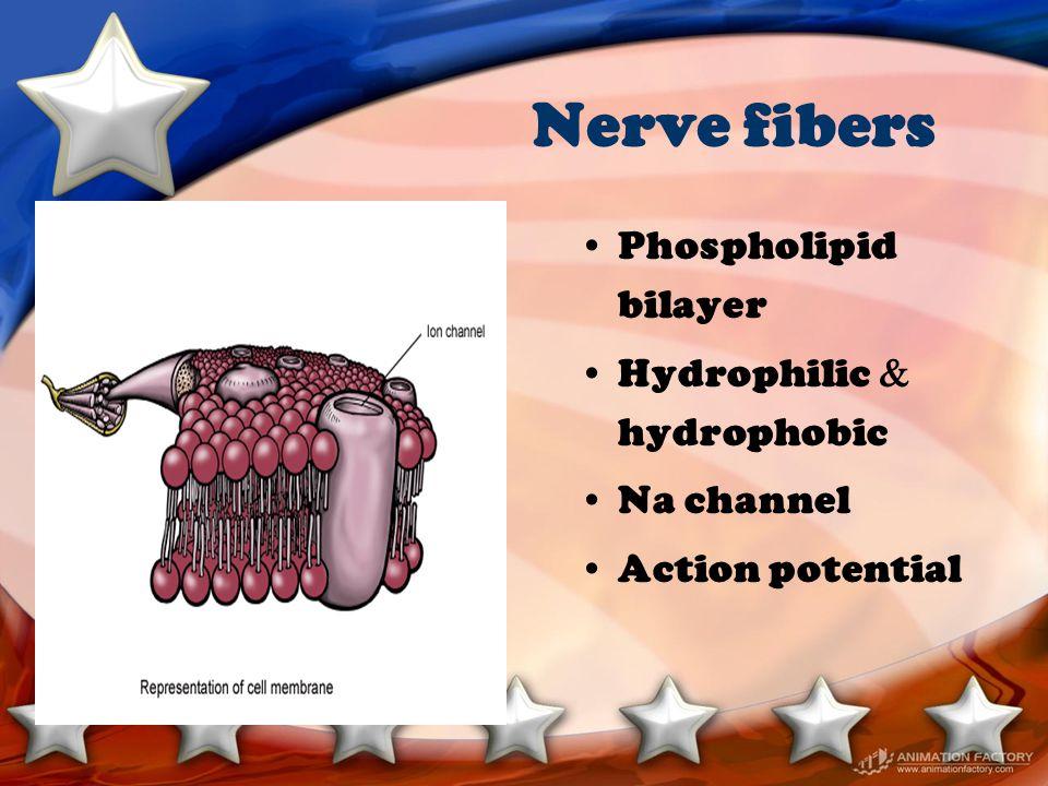 Pharmacokinetics Absorption : –Site of injection intravenous > tracheal > intercostal > caudal > paracervical > epidural > brachial plexus > femoral-sciatic > subcutaneous –Presence of vasoconstrictors –LA agent