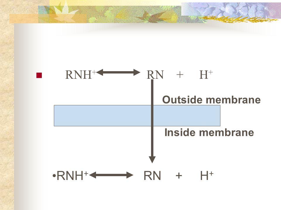 RNH + RN + H + Outside membrane RNH + RN + H + Inside membrane