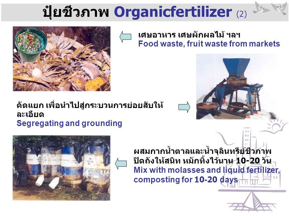 ปุ๋ยชีวภาพ Organicfertilizer (2) ผสมกากน้ำตาลและน้ำจุลินทรีย์ชีวภาพ ปิดถังให้สนิท หมักทิ้งไว้นาน 10-20 วัน Mix with molasses and liquid fertilizer, co