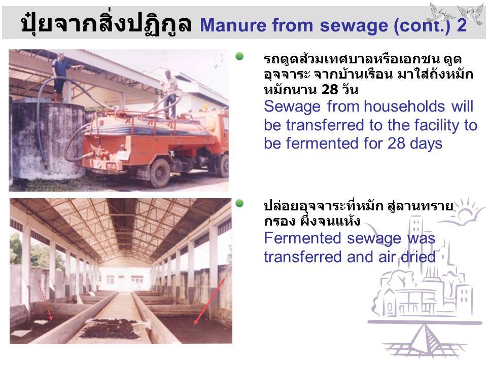 ปุ๋ยจากสิ่งปฏิกูล Manure from sewage (cont.) 2 รถดูดส้วมเทศบาลหรือเอกชน ดูด อุจจาระ จากบ้านเรือน มาใส่ถังหมัก หมักนาน 28 วัน Sewage from households wi
