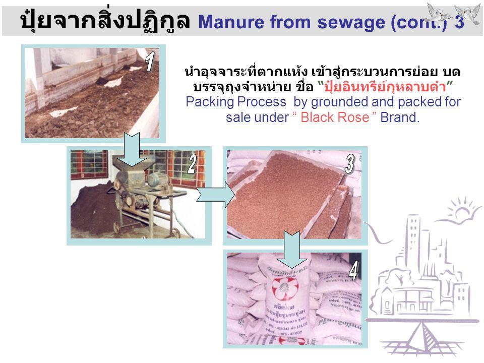 """ปุ๋ยจากสิ่งปฏิกูล Manure from sewage (cont.) 3 นำอุจจาระที่ตากแห้ง เข้าสู่กระบวนการย่อย บด บรรจุถุงจำหน่าย ชื่อ """"ปุ๋ยอินทรีย์กุหลาบดำ"""" Packing Process"""