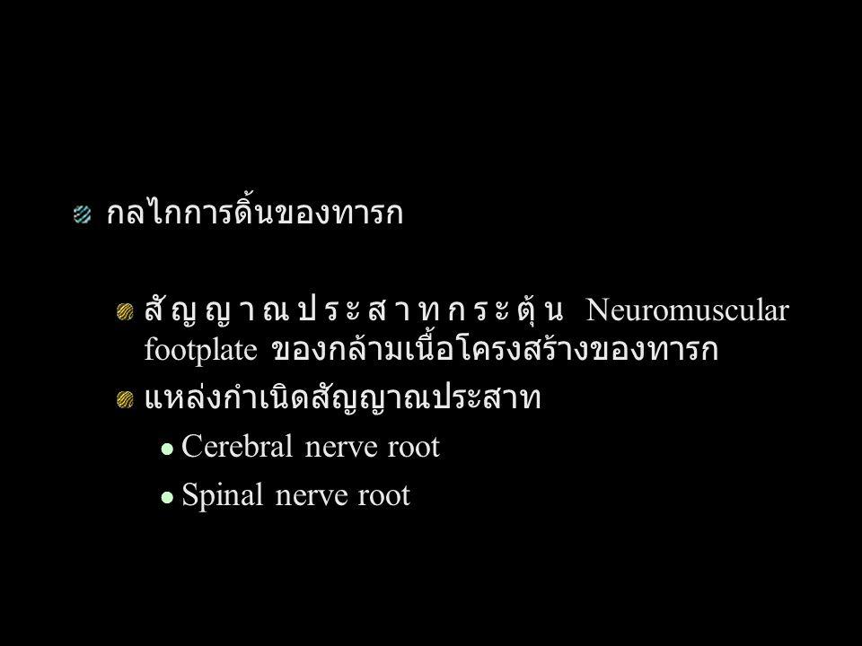 กลไกการดิ้นของทารก สัญญาณประสาทกระตุ้น Neuromuscular footplate ของกล้ามเนื้อโครงสร้างของทารก แหล่งกำเนิดสัญญาณประสาท Cerebral nerve root Spinal nerve root