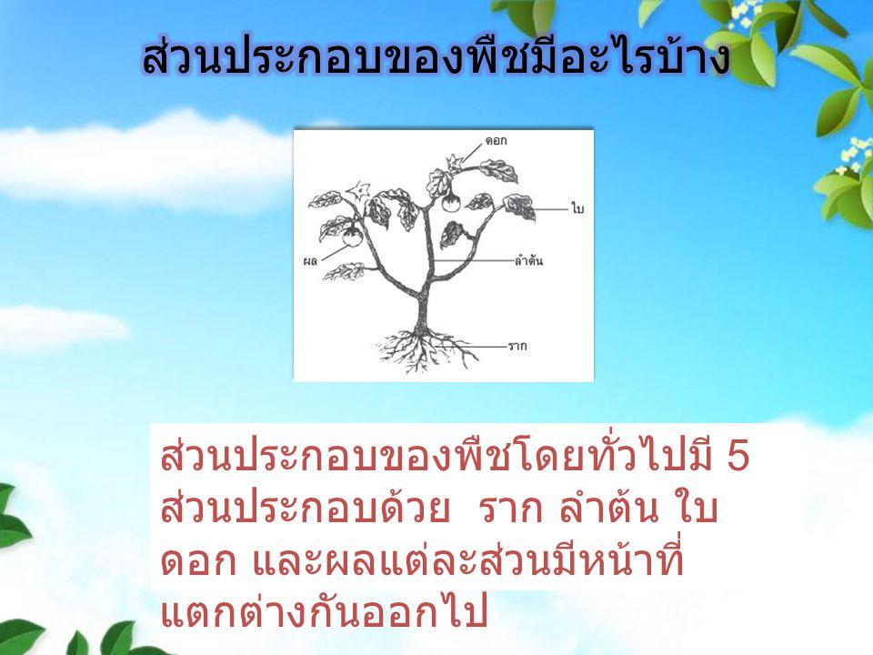 ส่วนประกอบของพืชโดยทั่วไปมี 5 ส่วนประกอบด้วย ราก ลำต้น ใบ ดอก และผลแต่ละส่วนมีหน้าที่ แตกต่างกันออกไป