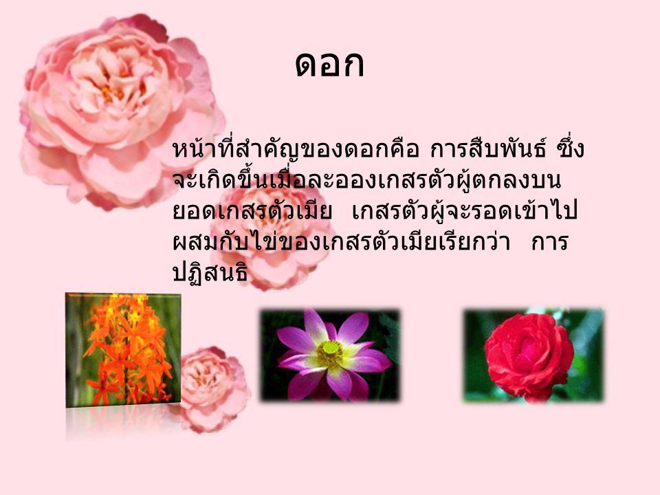 ดอก หน้าที่สำคัญของดอกคือ การสืบพันธ์ ซึ่ง จะเกิดขึ้นเมื่อละอองเกสรตัวผู้ตกลงบน ยอดเกสรตัวเมีย เกสรตัวผู้จะรอดเข้าไป ผสมกับไข่ของเกสรตัวเมียเรียกว่า ก