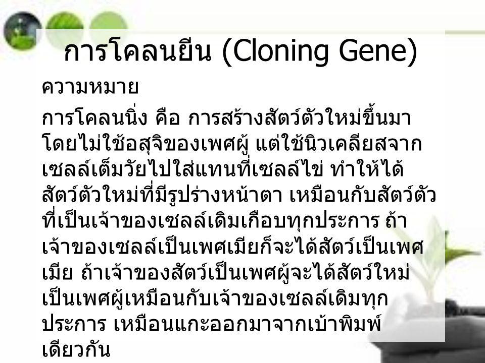 การโคลนยีน (Cloning Gene) ความหมาย การโคลนนิ่ง คือ การสร้างสัตว์ตัวใหม่ขึ้นมา โดยไม่ใช้อสุจิของเพศผู้ แต่ใช้นิวเคลียสจาก เซลล์เต็มวัยไปใส่แทนที่เซลล์ไ