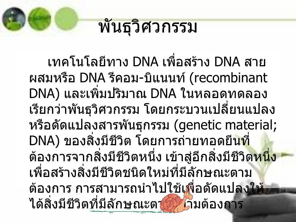 พันธุวิศวกรรม เทคโนโลยีทาง DNA เพื่อสร้าง DNA สาย ผสมหรือ DNA รีคอม - บิแนนท์ (recombinant DNA) และเพิ่มปริมาณ DNA ในหลอดทดลอง เรียกว่าพันธุวิศวกรรม โ