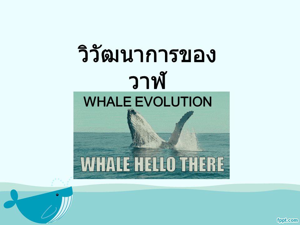 ข้อมูลเพิ่มเติม เมื่อวันที่ 11 ตุลาคม 2011 นักวิทยาศาสตร์ชาว อาเจนตินาได้เปิดเผย ว่าพบซากวาฬโบราณ อายุกว่า 49 ล้านปี ซึ่งคาดว่าเป็นซากวาฬที่มี อายุเก่าแก่ที่สุดเท่าที่เคยพบมา บนเกาะ Marambio ของประเทศอาร์เจนตินา ซึ่งอยู่ใน เขตขั้วโลกใต้ ซากวาฬโบราณดังกล่าวแสดง ลักษณะของขากรรไกรและฟันชัดเจนจนเชื่อได้ ว่าเป็น บรรพบุรุษของวาฬและโลมาที่เราพบใน ปัจจุบัน นักวิทยาศาสตร์หวังว่าการค้นพบครั้งนี้ จะช่วยทำให้เราเข้าใจถึงวิวัฒนาการ ของวาฬ ได้ดีขึ้น ในบริเวณขั้วโลกใต้ นอกจากพบซาก วาฬโบราณหลายตัว นักวิทยาศาสตร์ยังพบ ฟอสซิลคล้ายไดโนเสาร์ สัตว์เลื้อยคลาน และ โครงกระดูกของเพนกวินยักษ์อีกด้วย