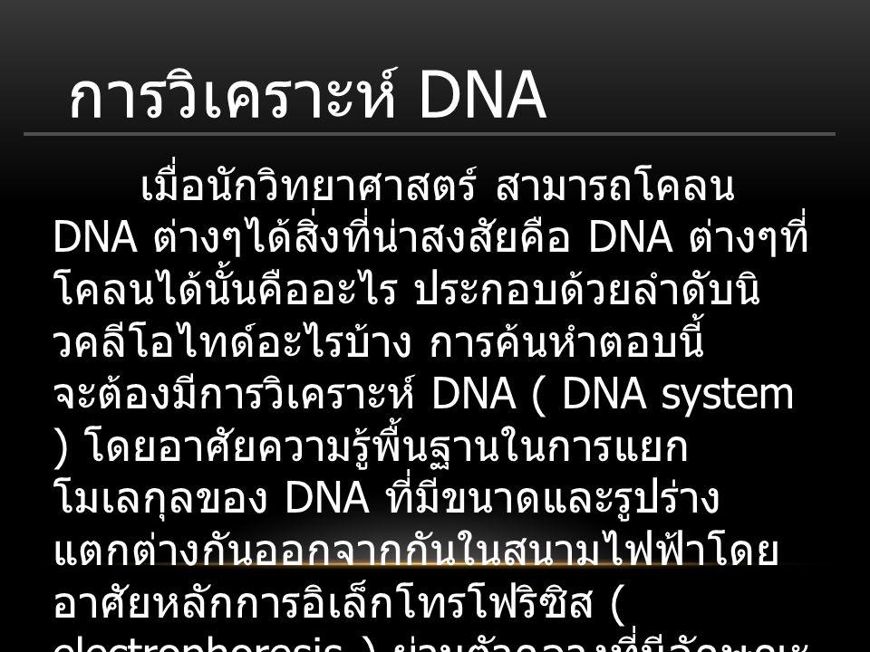 การวิเคราะห์ DNA เมื่อนักวิทยาศาสตร์ สามารถโคลน DNA ต่างๆได้สิ่งที่น่าสงสัยคือ DNA ต่างๆที่ โคลนได้นั้นคืออะไร ประกอบด้วยลำดับนิ วคลีโอไทด์อะไรบ้าง กา
