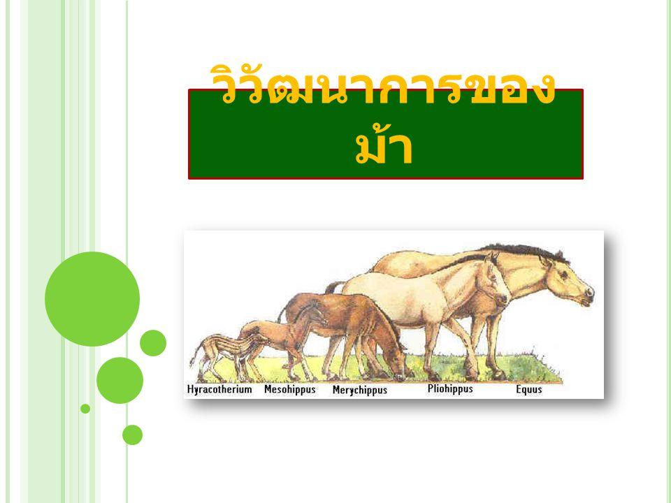 วิวัฒนาการของ ม้า