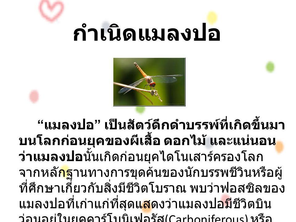 กำเนิดแมลงปอ แมลงปอ เป็นสัตว์ดึกดำบรรพ์ที่เกิดขึ้นมา บนโลกก่อนยุคของผีเสื้อ ดอกไม้ และแน่นอน ว่าแมลงปอนั้นเกิดก่อนยุคไดโนเสาร์ครองโลก จากหลักฐานทางการขุดค้นของนักบรรพชีวินหรือผู้ ที่ศึกษาเกี่ยวกับสิ่งมีชีวิตโบราณ พบว่าฟอสซิลของ แมลงปอที่เก่าแก่ที่สุดแสดงว่าแมลงปอมีชีวิตบิน ว่อนอยู่ในยุคคาร์โบนิเฟอรัส (Carboniferous) หรือ ประมาณ 300 ล้านปีผ่านมาแล้ว