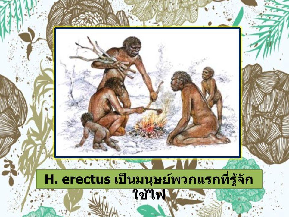 H. erectus เป็นมนุษย์พวกแรกที่รู้จัก ใช้ไฟ