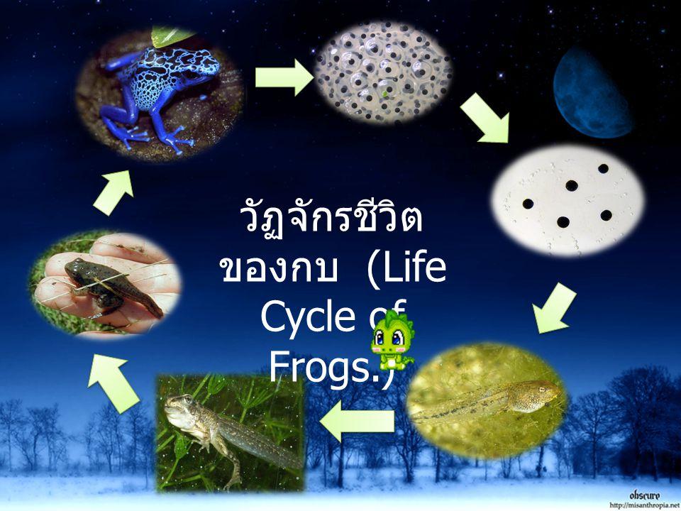 วัฏจักรชีวิต ของกบ (Life Cycle of Frogs.)