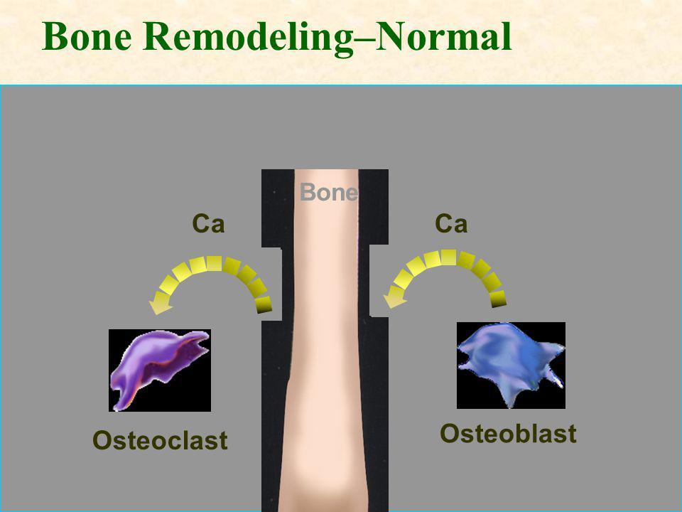 Bone Remodeling–Normal Bone Osteoblast Osteoclast Ca