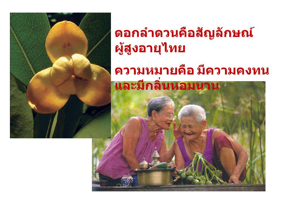 ดอกลำดวนคือสัญลักษณ์ ผู้สูงอายุไทย ความหมายคือ มีความคงทน และมีกลิ่นหอมนาน