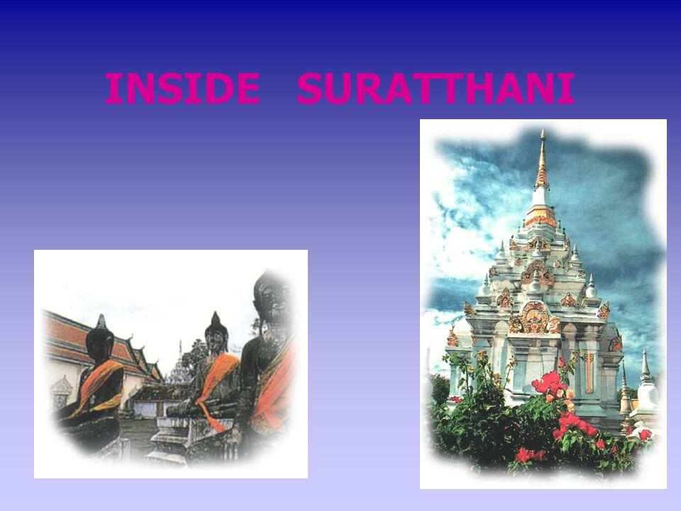 INSIDE SURATTHANI