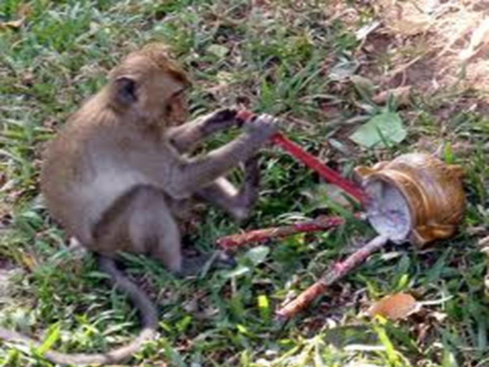 ในขณะที่ลา ได้แต่มองดูการ กระทำของเจ้าลิงอยู่เฉย ๆ