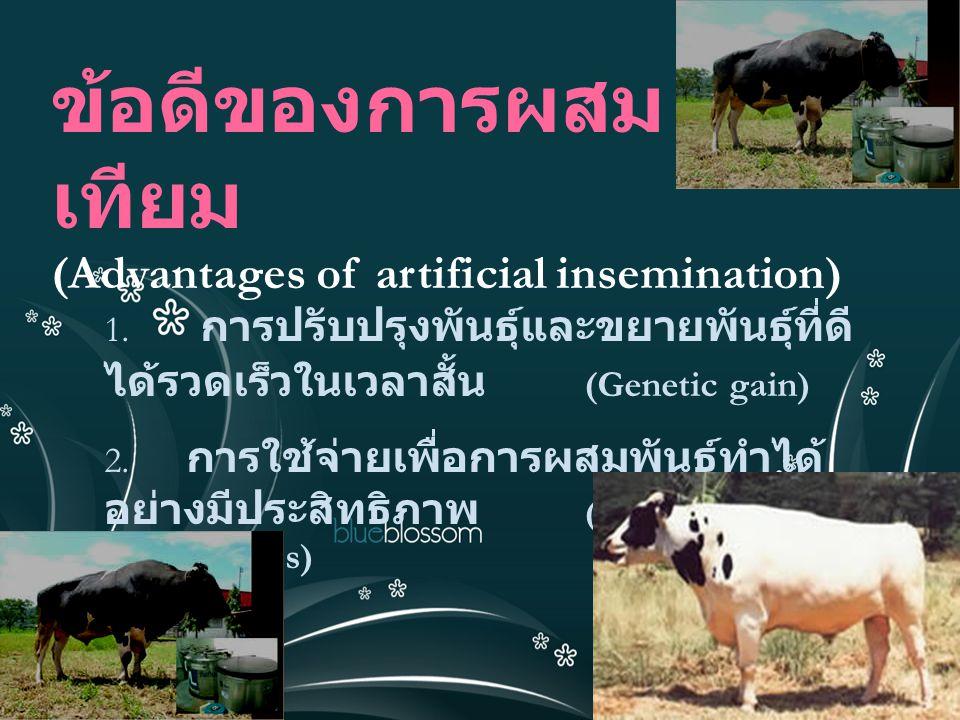 ข้อดีของการผสม เทียม (Advantages of artificial insemination) 1. การปรับปรุงพันธุ์และขยายพันธุ์ที่ดี ได้รวดเร็วในเวลาสั้น (Genetic gain) 2. การใช้จ่ายเ