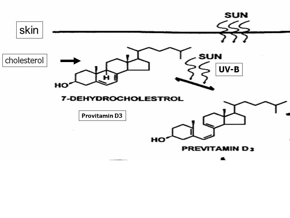 Provitamin D3 cholesterol UV-B skin