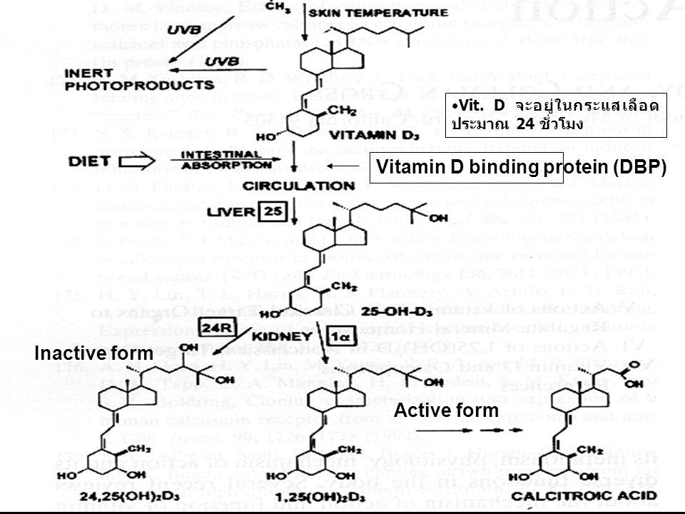 Vitamin D binding protein (DBP) Vit. D จะอยู่ในกระแสเลือด ประมาณ 24 ชั่วโมง Inactive form Active form