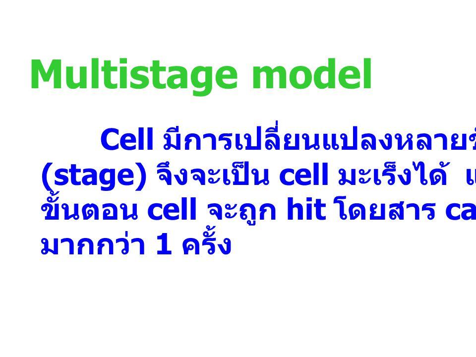 Multistage model Cell มีการเปลี่ยนแปลงหลายขั้นตอน (stage) จึงจะเป็น cell มะเร็งได้ และแต่ละ ขั้นตอน cell จะถูก hit โดยสาร carcinogen มากกว่า 1 ครั้ง