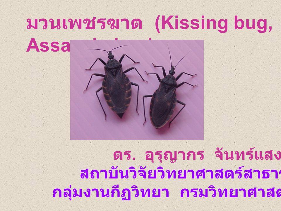 มวนเพชรฆาต (Kissing bug, Assassin bug) ดร.