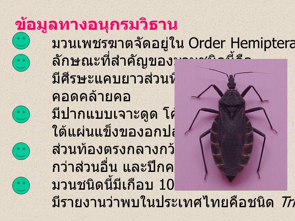 ข้อมูลทางอนุกรมวิธาน มวนเพชรฆาตจัดอยู่ใน Order Hemiptera, Family Reduviidae ลักษณะที่สำคัญของมวนชนิดนี้คือ มีศีรษะแคบยาวส่วนที่อยู่หลังตา คอดคล้ายคอ มีปากแบบเจาะดูด โค้งงอสอดอยู่ ใต้แผ่นแข็งของอกปล้องแรก ส่วนท้องตรงกลางกว้าง กว่าส่วนอื่น และปีกคลุมไม่หมด มวนชนิดนี้มีเกือบ 100 ชนิด เท่าที่ มีรายงานว่าพบในประเทศไทยคือชนิด Triatoma rubrofasciata