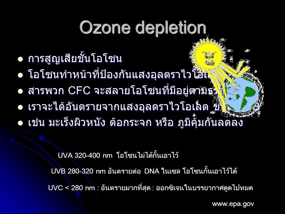 Ozone depletion การสูญเสียชั้นโอโซน การสูญเสียชั้นโอโซน โอโซนทำหน้าที่ป้องกันแสงอุลตราไวโอเลต โอโซนทำหน้าที่ป้องกันแสงอุลตราไวโอเลต สารพวก CFC จะสลายโอโซนที่มีอยู่ตามธรรมชาติ สารพวก CFC จะสลายโอโซนที่มีอยู่ตามธรรมชาติ เราจะได้อันตรายจากแสงอุลตราไวโอเลต ชนิด UVB เราจะได้อันตรายจากแสงอุลตราไวโอเลต ชนิด UVB เช่น มะเร็งผิวหนัง ต้อกระจก หรือ ภูมิคุ้มกันลดลง เช่น มะเร็งผิวหนัง ต้อกระจก หรือ ภูมิคุ้มกันลดลง UVA 320-400 nm โอโซนไม่ได้กั้นเอาไว้ UVB 280-320 nm อันตรายต่อ DNA ในเซล โอโซนกั้นเอาไว้ได้ UVC < 280 nm : อันตรายมากที่สุด : ออกซิเจนในบรรยากาศดูดไปหมด www.epa.gov