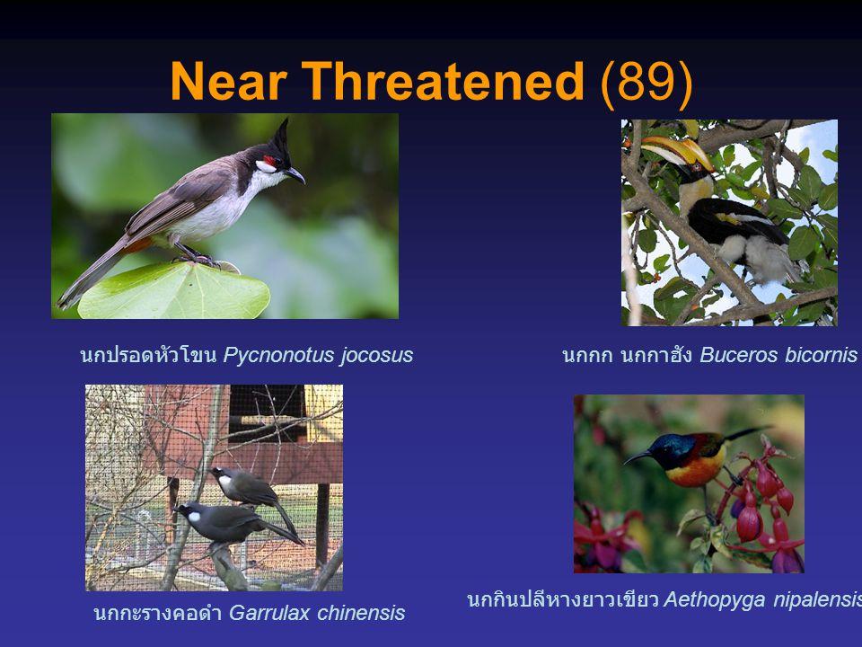 Near Threatened (89) นกกก นกกาฮัง Buceros bicornis นกกะรางคอดำ Garrulax chinensis นกกินปลีหางยาวเขียว Aethopyga nipalensis นกปรอดหัวโขน Pycnonotus joc