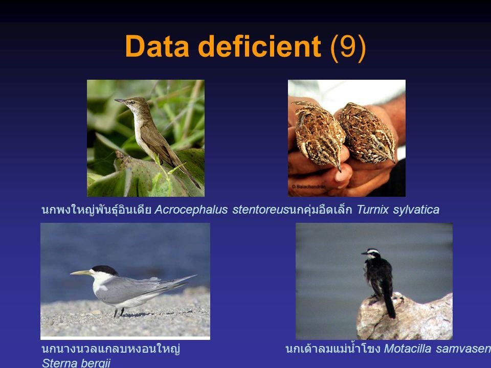 Data deficient (9) นกนางนวลแกลบหงอนใหญ่ Sterna bergii นกพงใหญ่พันธุ์อินเดีย Acrocephalus stentoreus นกเด้าลมแม่น้ำโขง Motacilla samvasenae นกคุ่มอืดเล็ก Turnix sylvatica
